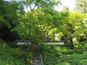 高倉天皇陵前の新緑